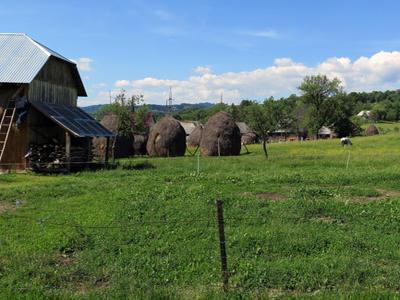 Africký mor prasat nově potvrzen také v Rumunsku
