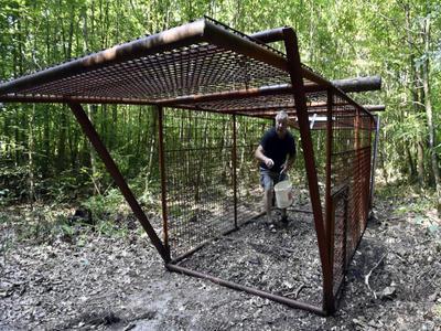 Do konce srpna bude v ohnisku nákazy instalováno osm odchytových klecí
