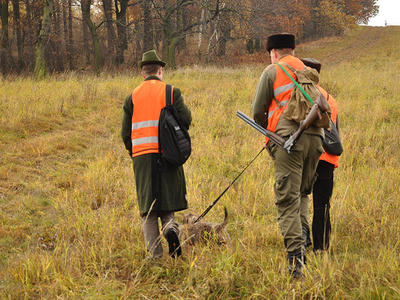 AMP v Polsku: zvláštní dovolená pro myslivce, aby mohli lovit divočáky