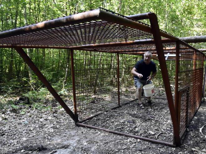 Myslivci chytili do klecí na Zlínsku 114 prasat, poslední v červnu