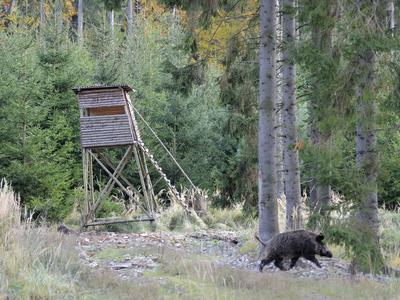 Veterináři zrušili zákaz vstupu do lesů a polí v okolí Zlína
