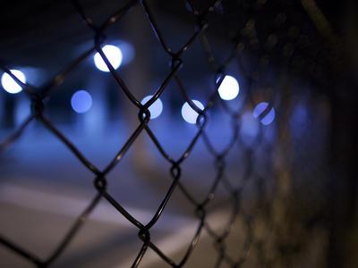 Dánsko: Srnčí zvěř hyne při pokusech překonat plot vybudovaný proti šíření AMP
