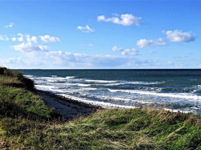 Těla 7 utonulých divočáků se vyplavila na dánském pobřeží – testy na AMP provedeny nebyly