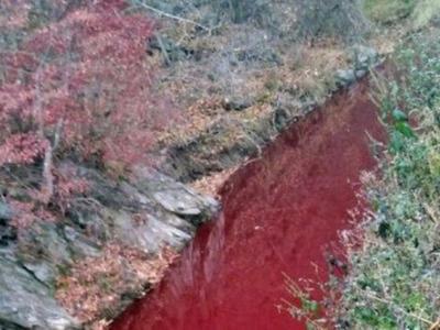 AMP V Asii: 5,8 milionu utracených prasat ve Vietnamu, řeka zbarvená krví prasat v Jižní Koreji
