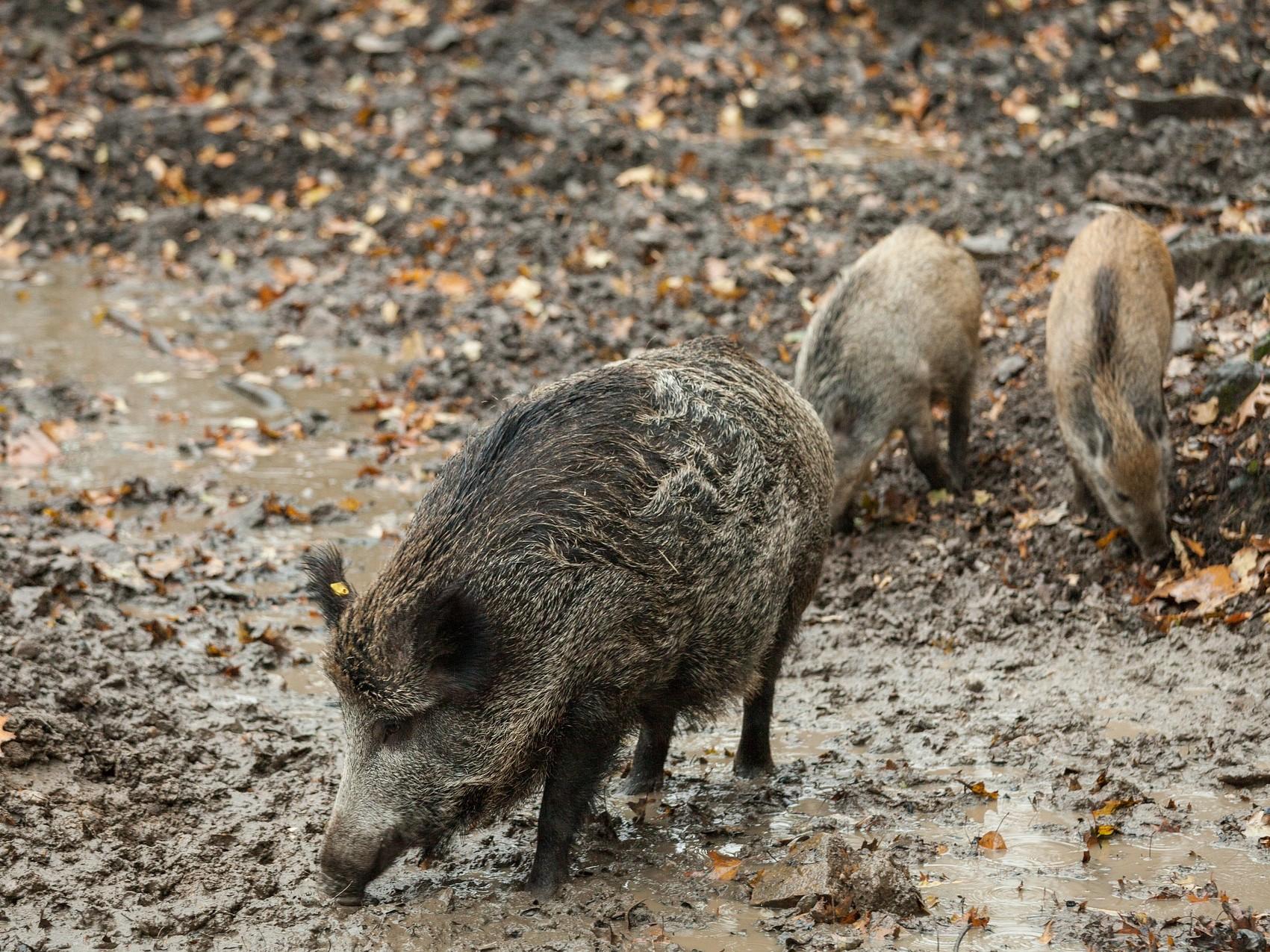Vyjádření Krajské veterinární správy Libereckého kraje k AMP